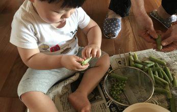 お豆の季節